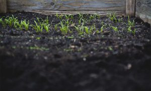 Upgrade the soil with Humitine